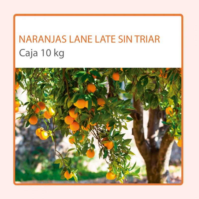 Caja de 10 kg de Naranja de mesa