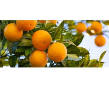 Usos de la Naranja