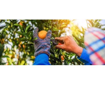 ¿Cómo comprar naranjas online?