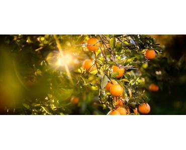 Cantidad diaria recomendada de Vitamina C
